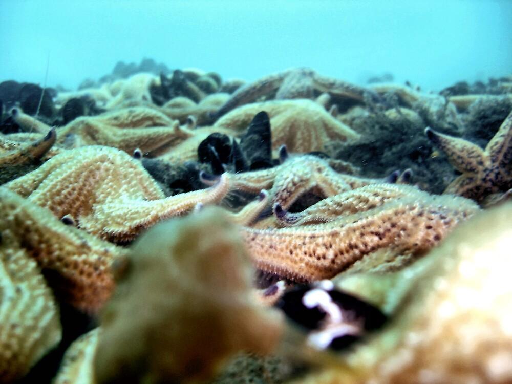 Northan Sea Star by Fishbait
