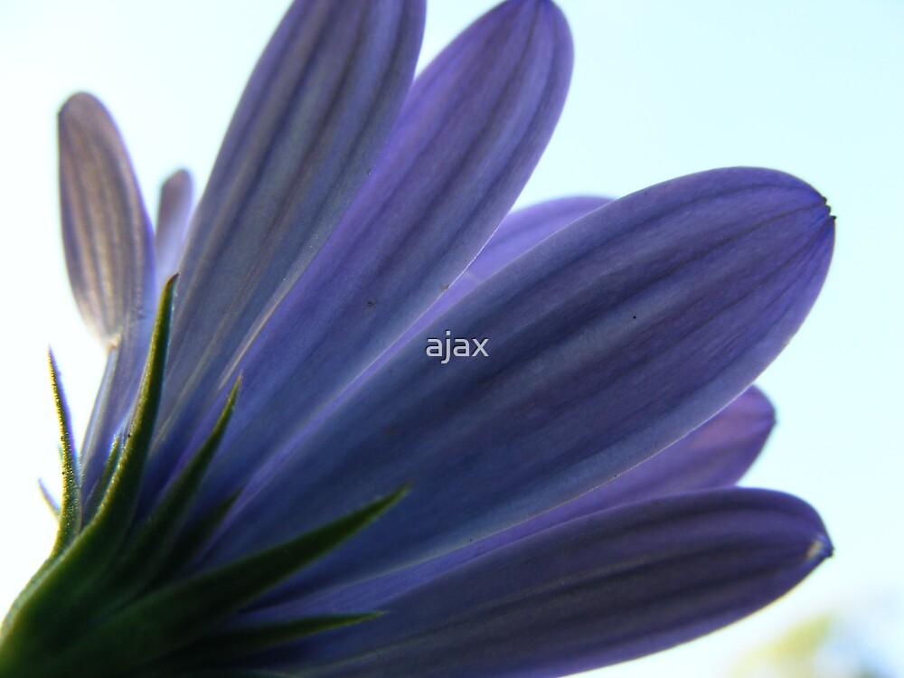 blue petals by ajax