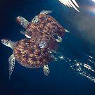 Green Sea Turtle by Carlos Villoch