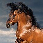 draft horse closeup portrait by olgaitina