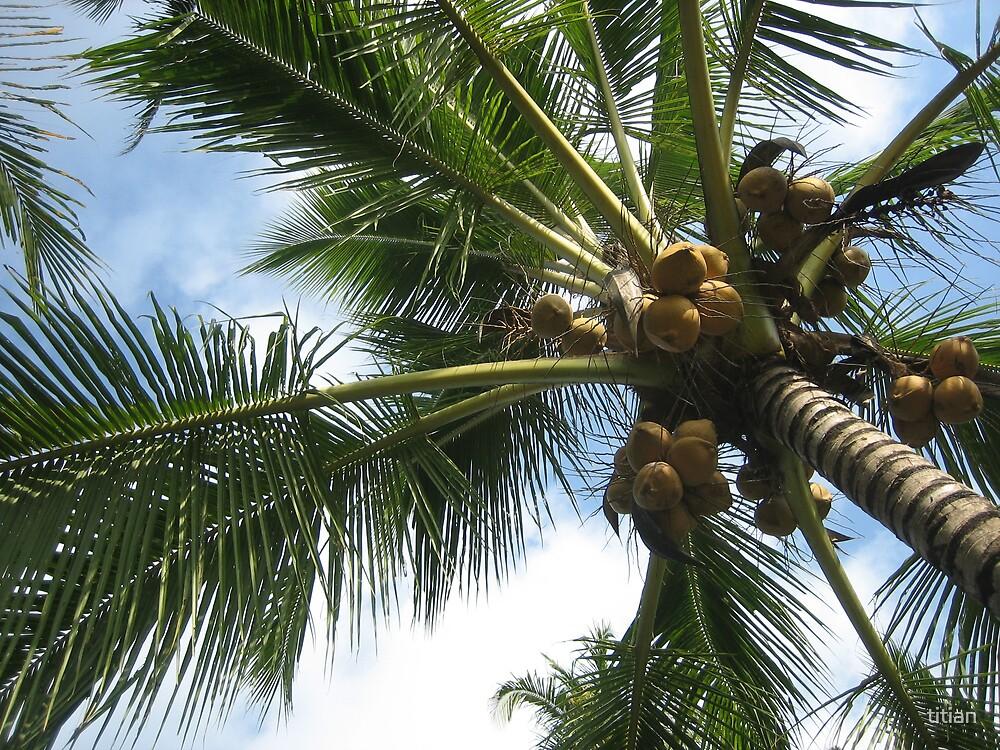 Palmtree by titian
