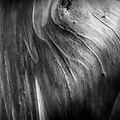 The Tree Bark Collection # 18  - The Magic Tree by Philip Johnson
