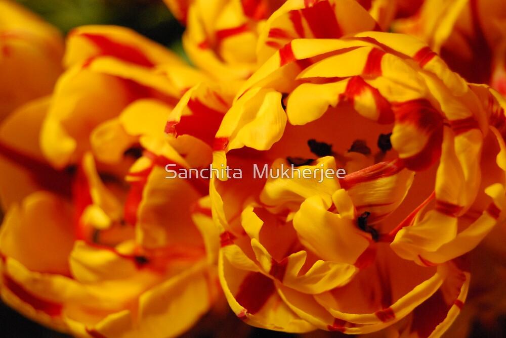 fire by Sanchita  Mukherjee