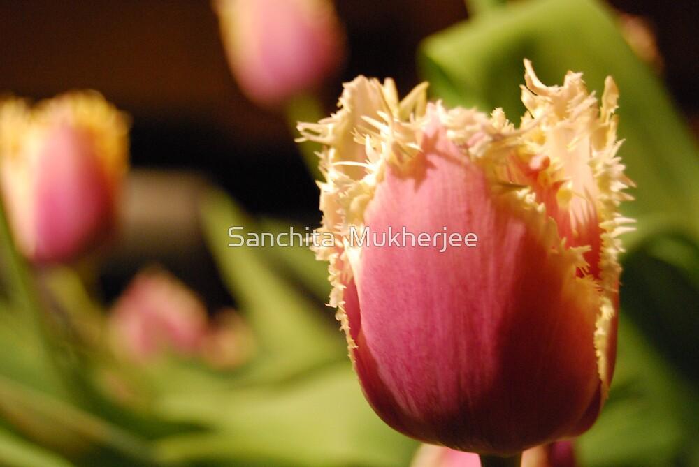 tulip and lace by Sanchita  Mukherjee