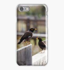Indian myna birds, iPhone Case/Skin