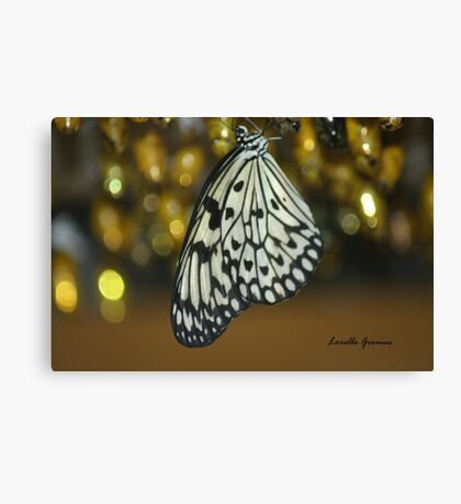 No Longer In My Cocoon Canvas Print