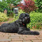 Garden Portrait of Izzy by Vicki Spindler (VHS Photography)