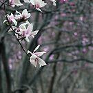 Magnolia Grove by elasita