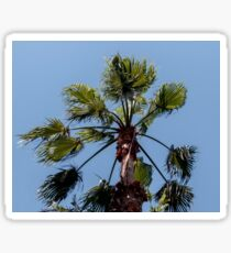 Leaves of a tropical palm tree Sticker