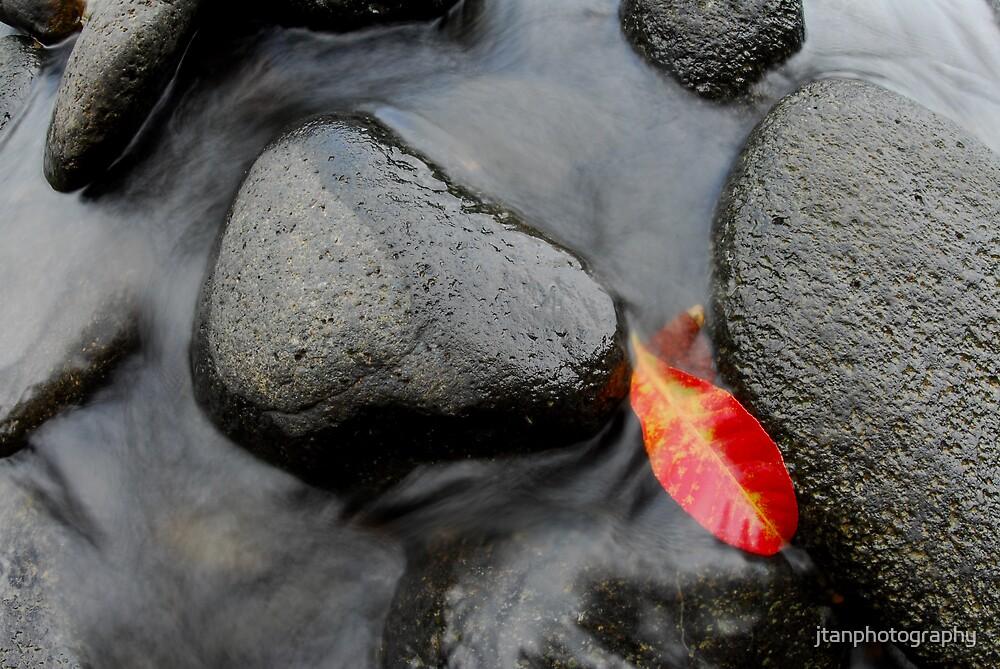 Fallen Leaf by jtanphotography