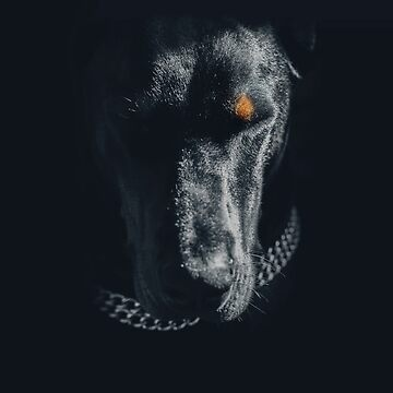 Doberman by LilaVert