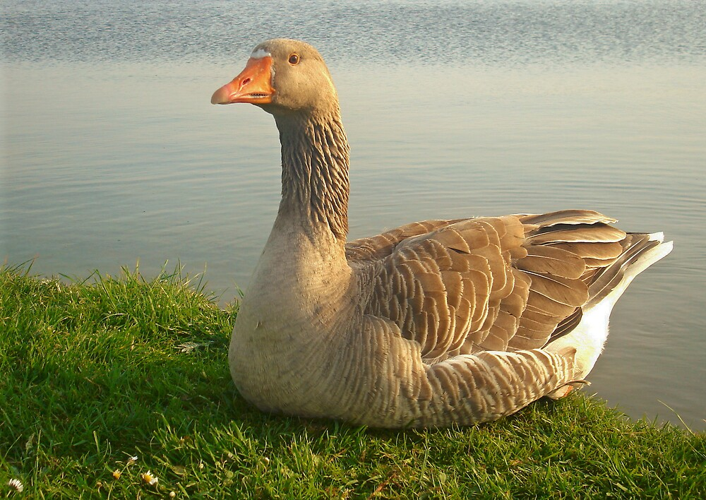 Goose. by Kate Towers IPA