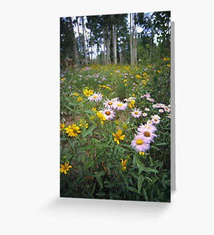 Wildflowers, Grand Mesa, Colorado Greeting Card