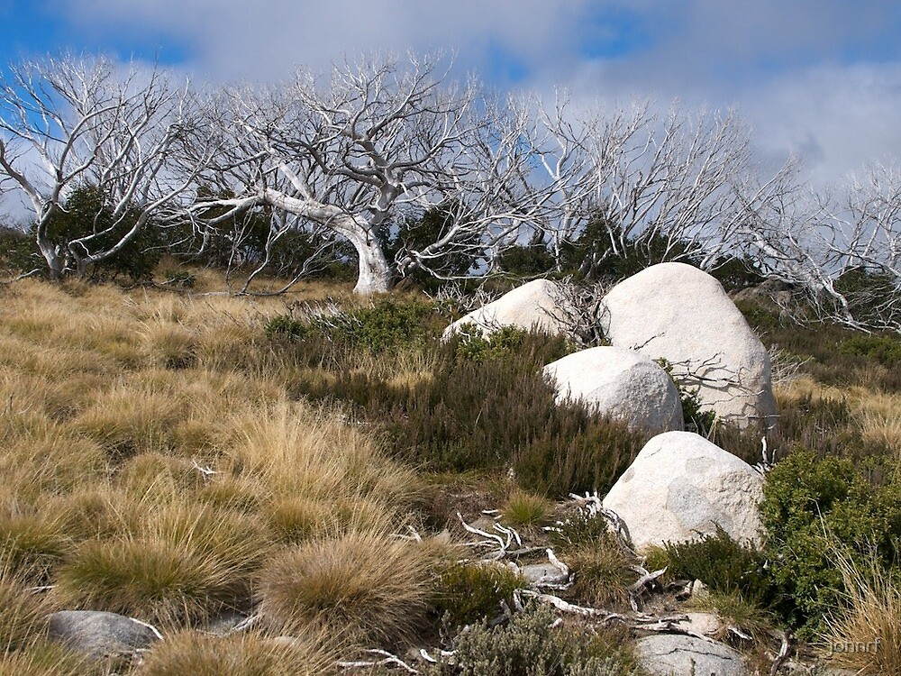 Bogong High Country Australia by johnrf