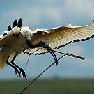 Birds only by Paulo van Breugel