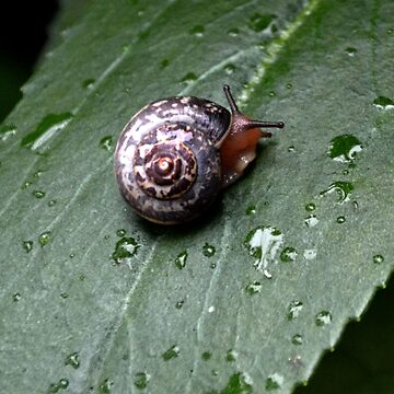Tiny Snail in the garden..Lyme Dorset UK by lynn45