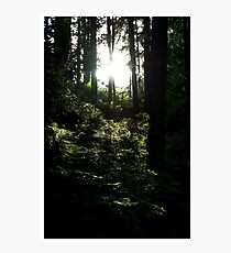 Sunlight Tinged Woodland Photographic Print