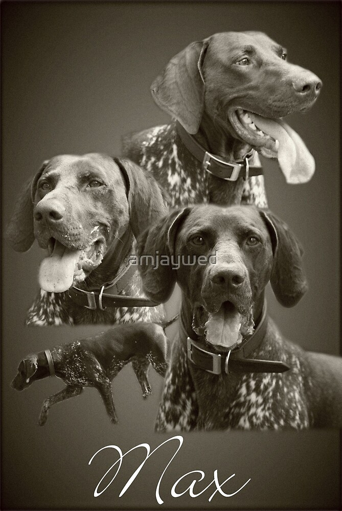 Max Portrait - German short-haired pointer by amjaywed