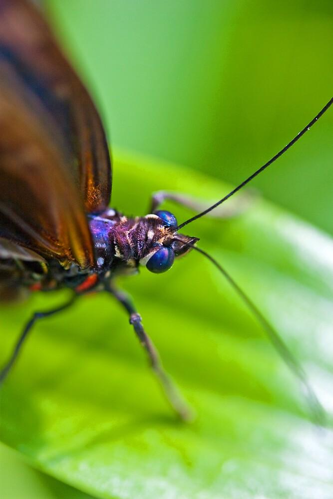 Butterfly on green leaf by RLJe