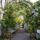 Garden Tunnel by Sharlene Rens