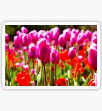 Tulips in spring sun Sticker