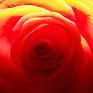 Vibrant Rose by Glenna Walker