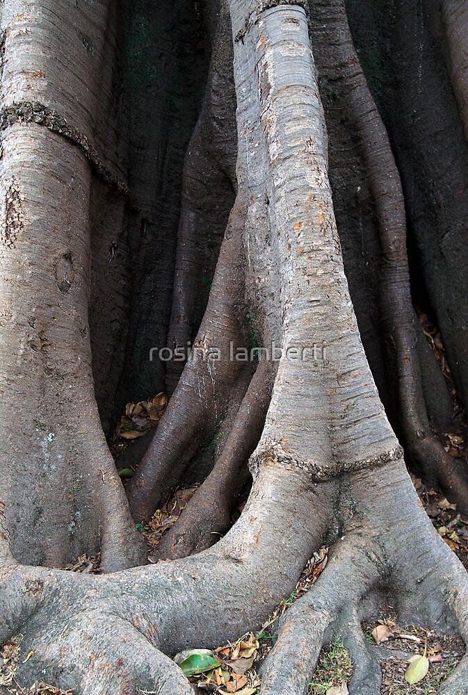 Family tree by Rosina  Lamberti