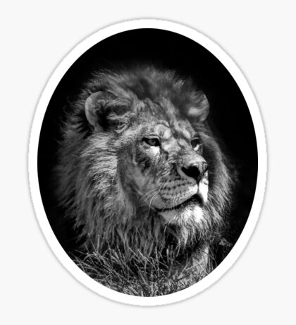Proud Young Lion Sticker