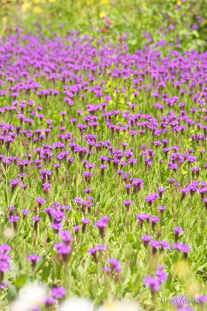 Purple Desert Flowers by Henri Irizarri