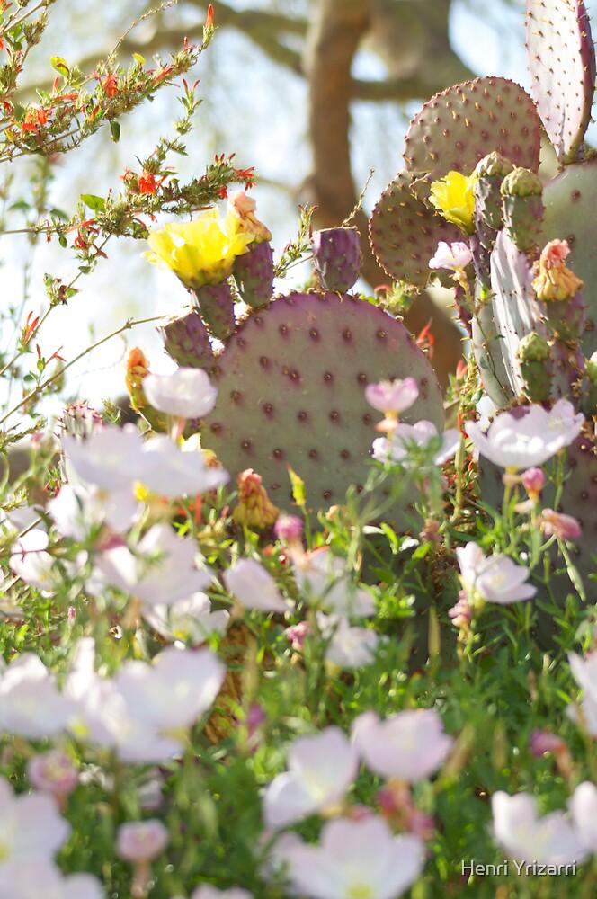 Arizona Cactus & Wild Flowers by Henri Irizarri