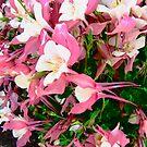 Pink Azaleas by Shulie1