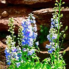 Blue Lupins by Shulie1