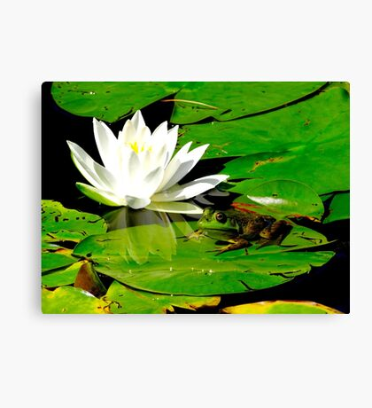Basking in the reflection Canvas Print