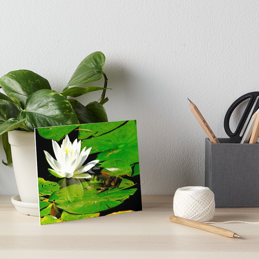 Basking in the reflection Art Board Print