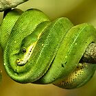 Green Tree Snake by Yampimon