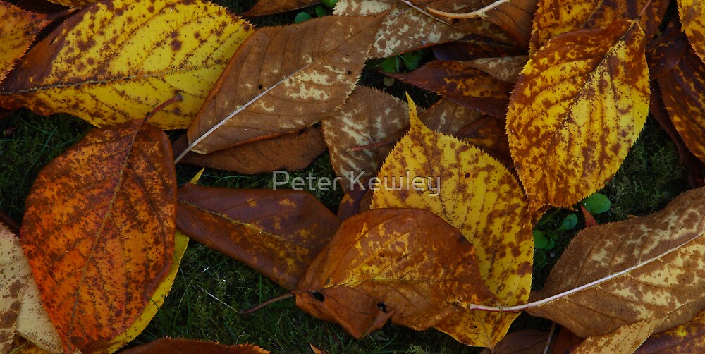 AUTUMN FALL by Peter Kewley
