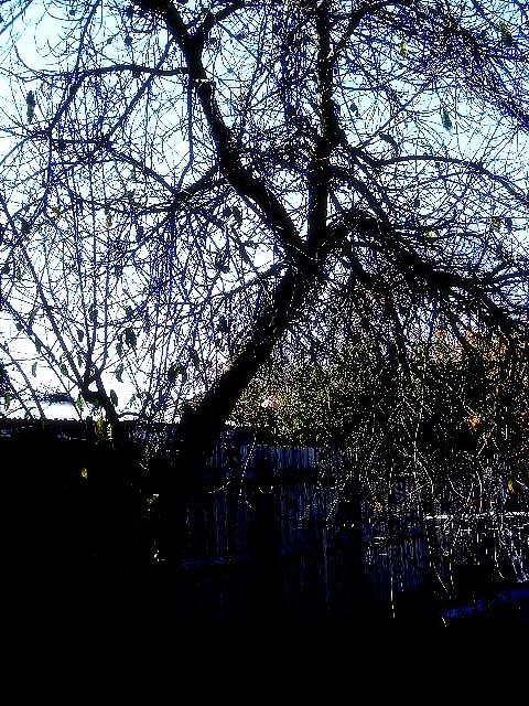 Tree by keara