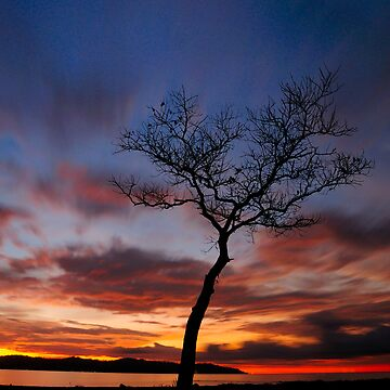Tree Silhouette At Dusk by jollence