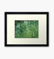 Wild Carrots (I think) Framed Print
