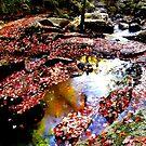 River walk in autumn by Beth Brightman