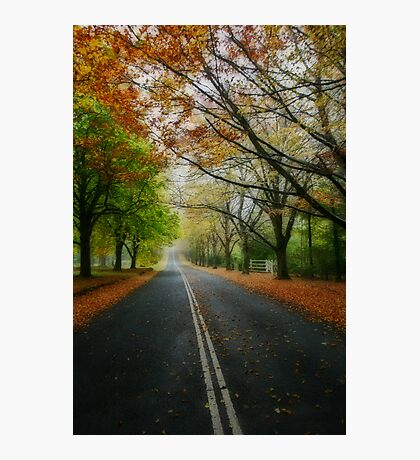 Autumn Journey Photographic Print