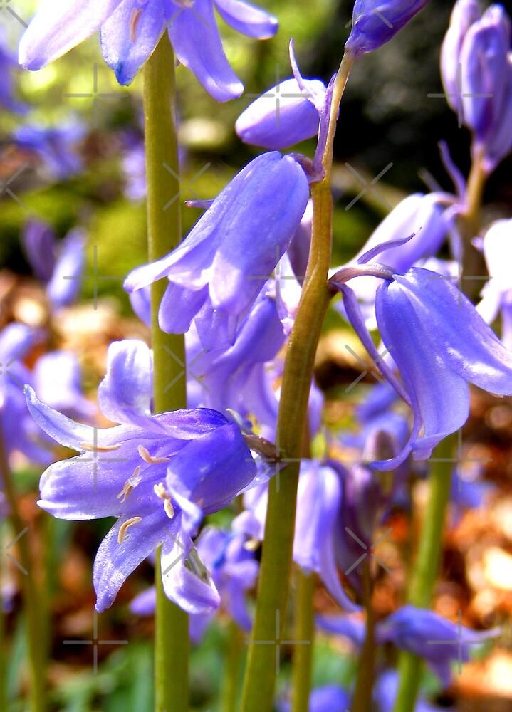 colour me blue 2 by dnlddean