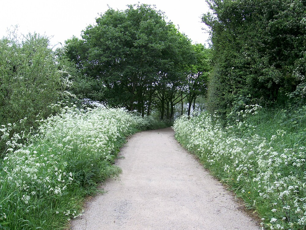Summertime path at Kingsbury water park. by chuckchuck