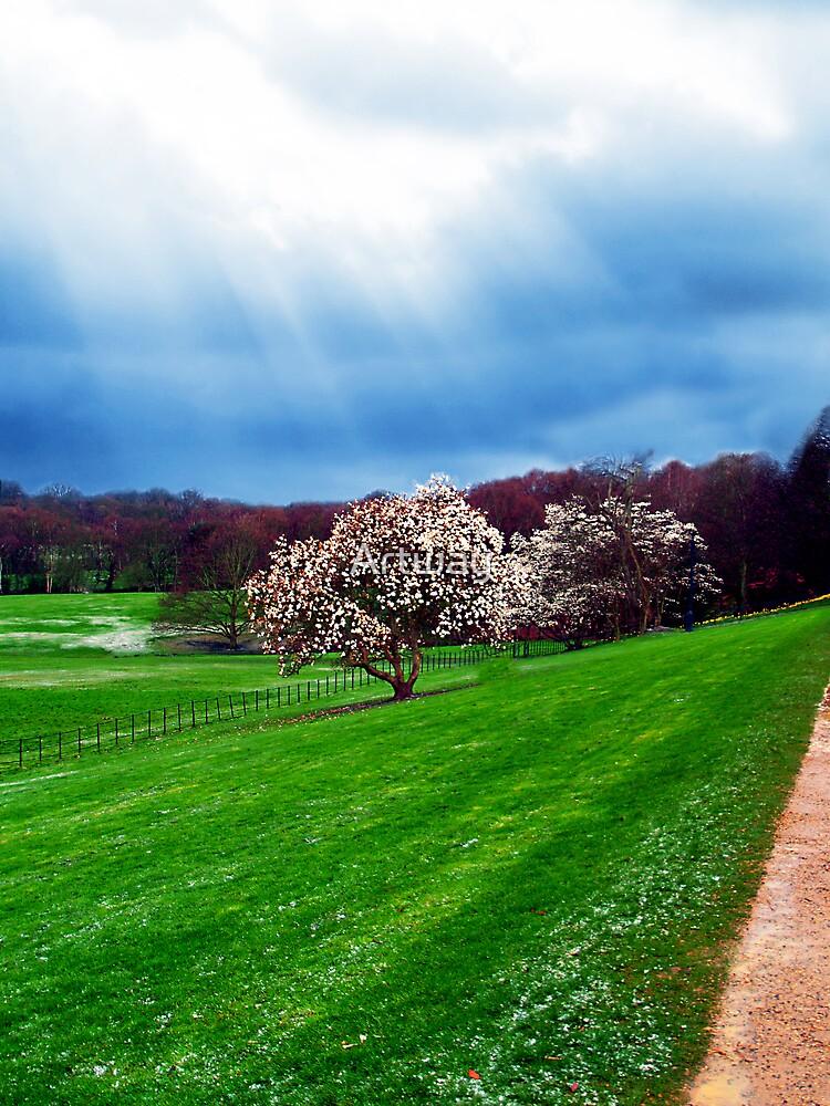 Cherry Blossom Sky by Artway