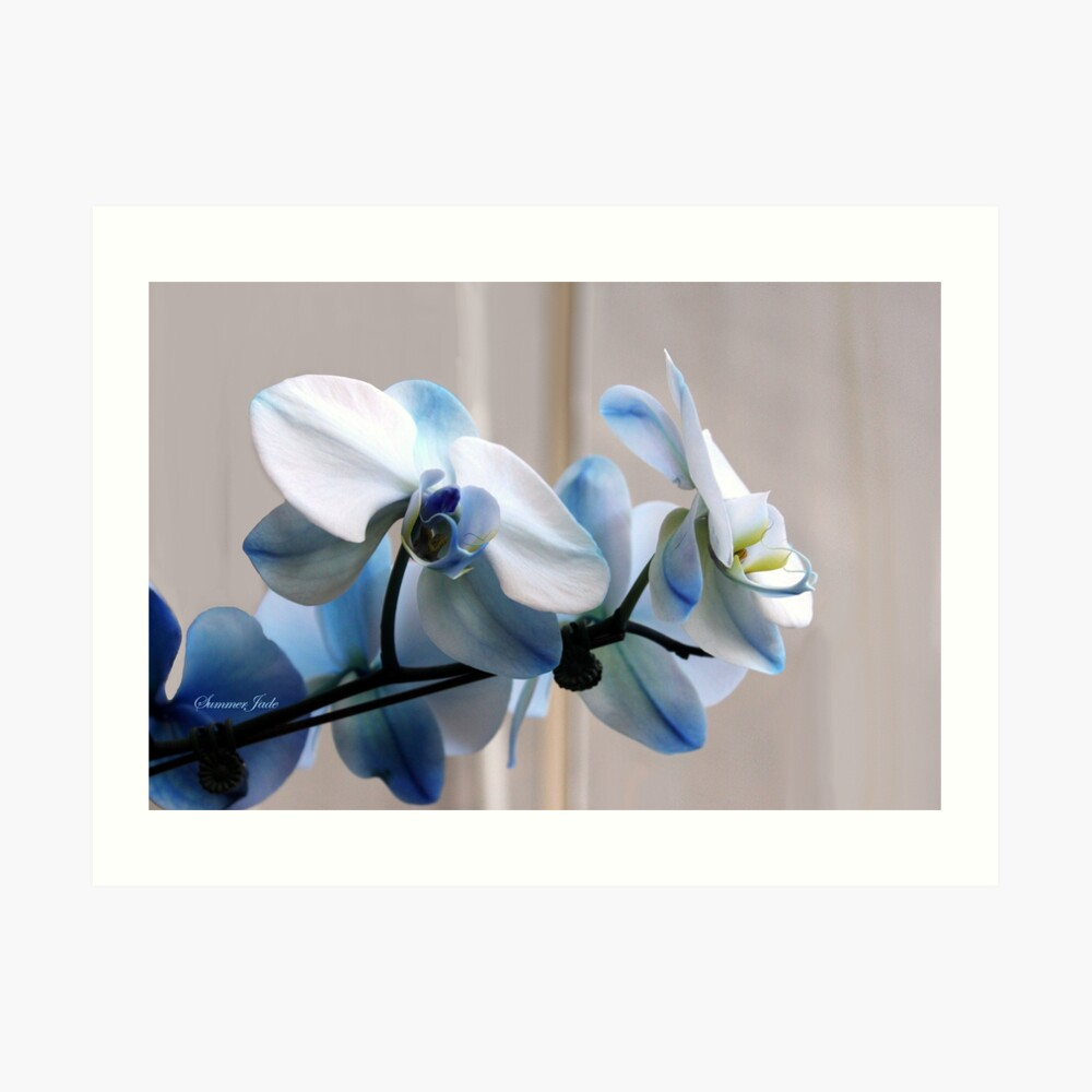 Crystal Blue Persuasion ~ Orchids Art Print