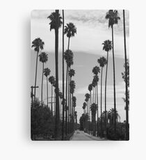 Vintage Black & White California Palm Trees Photo Canvas Print