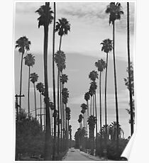 Vintage Black & White California Palm Trees Photo Poster
