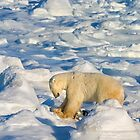 Polar Push to Save Our Sea Ice by Owed To Nature