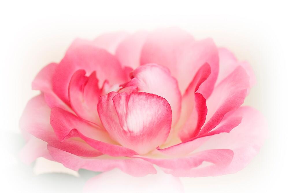 Rose Beauty by Kardz4Kenya