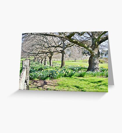 Spring at Ridgley Greeting Card